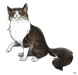 Hurrem the Cat by Scink