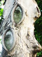 The trees have eyes by korinoryu