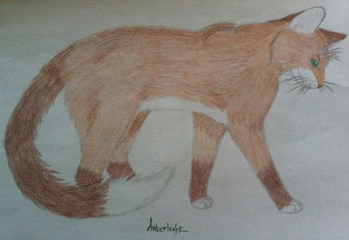 My Warrior Cat OC by Amberleaf776