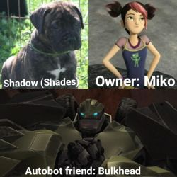Transformers Prime: The Autopups - Shade by DragonPatrol95