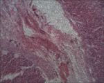 Microscope: Dog Stomach by Soldeen111