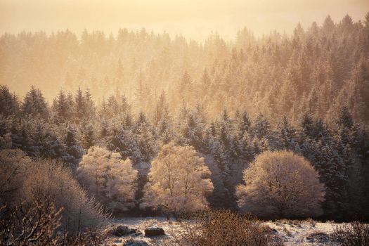 Glimpse of Winter by FlorentCourty