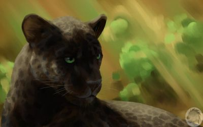 Panther in a jungle by Kivuli