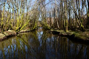 River stock by Angband