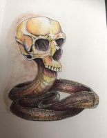 Snake skull - watercolour by GamingHedgehog