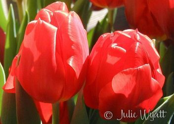 Red blooms of spring by juliwy