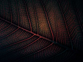 Lava Leaf by WillTC