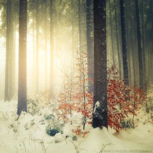 Winter's Scene by MarcoHeisler