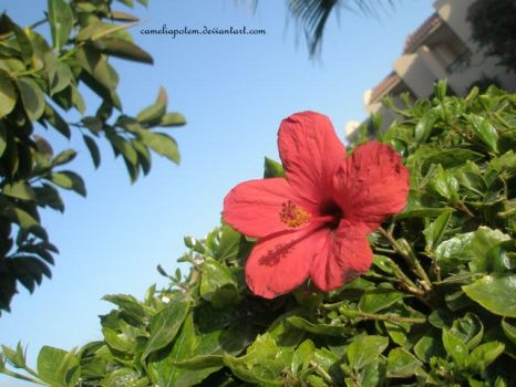 The paradisiacal flower by cameliapotem