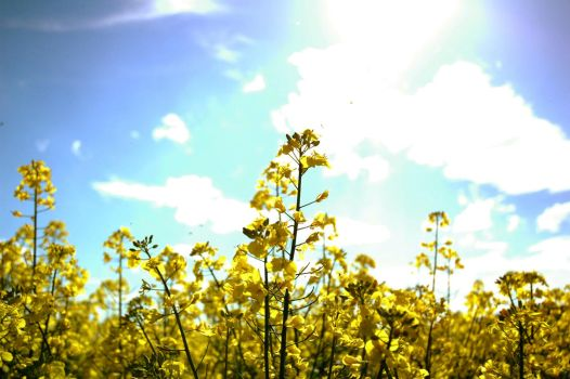rape field by Chreeys