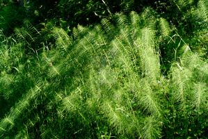 Horsetails and shadows by seancfinnigan