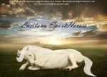 Lusitano Sporthorses by MollyMay335