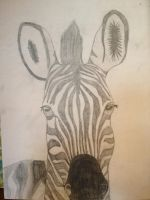Art project: Zebra by Dillon-the-hedgehog