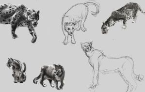 From the Sketchbook: Cats study by IRCSS