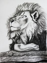 Lion by mayhemcamaro