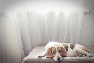 Dog In sunlight by Non-Smoking