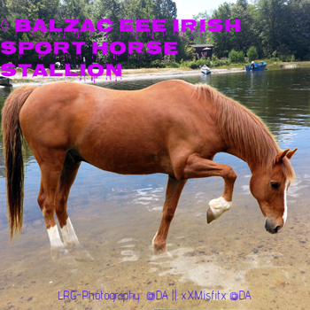 BLAZC EEE STALLY by Firgrove-Stables