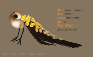 Parasitic Collection: Cistanche [closed] by witherlings