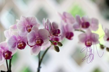 orchids by 1001G