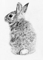 Rabbit by AnnaShell