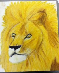 Lion by nikkissippi121