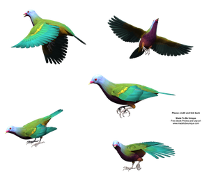 Unique Fruit Dove - Colorful by madetobeunique