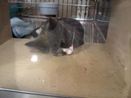 sleeping kitten at my local petsmart by michelous