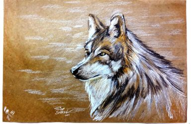 Wolf pencil sketch by thiagospyked