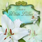 Lucie's White Lillies by LucieG-Stock