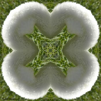 Fractal soft and fluffy by Book-Art