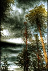 Shadows and tall trees 2 by Swaroop