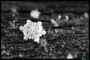 Spring Snowflake by thephotoxcore
