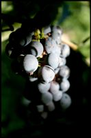 Bunch of grapes. by andrisanteodora