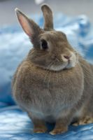 Fluffy Wabbit :P by daemoniaphotography