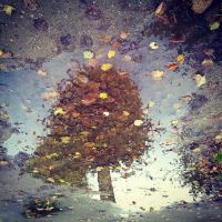 window to the autumn by siby