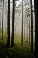misty forest by qubq