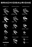 Brachiosaurid skull comparison by Paleo-King