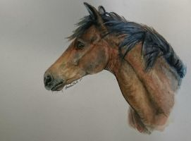 Bay horse in hard watercolors by QueenAnneka