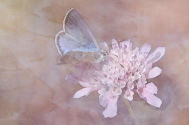 Butterfly Watercolor by ArtistMeganNicole
