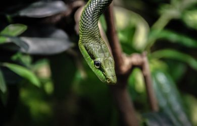 Snake by Talis2000