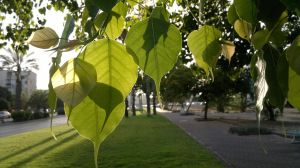Green leaves 4... by Shantifiy