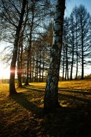 Tall trees - Long shadow by GeoffroyVincens