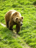 L ours 2 by Flore-stock