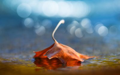 Fallen Leaf by Andruhastepanov
