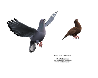 rock dove bird flying stock by madetobeunique