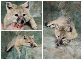 Kit Fox Soft Mount 2.0 (1) by WeirdCityTaxidermy