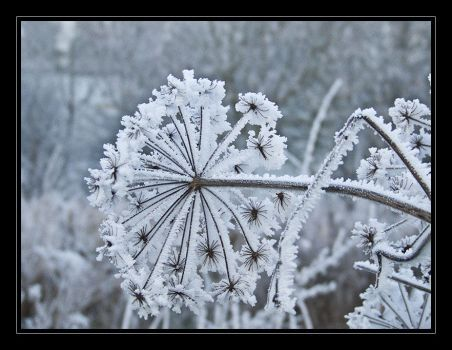 Frozen plants by iMacThere4iAm