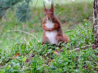Lovely shades of red and green by Squirrels2poet2queen