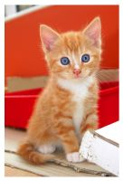 Ginger Spaz by Speckled-Cookie-