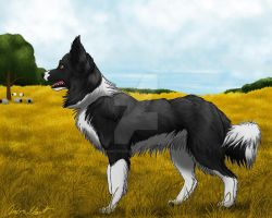 Border Collie by RunsWithHorses707